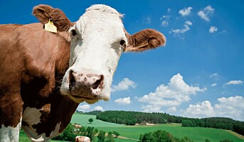 Store dyr farligere enn traktoren