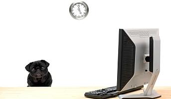 Mindre stress med hund på jobben