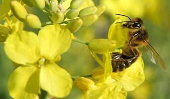 Blomster og bier bedrer arbeidsmiljøet
