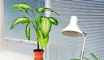 Bruk grønne planter på kontoret