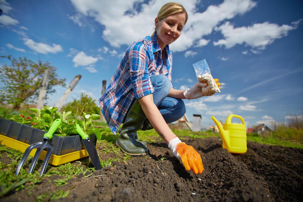 Gartnere har lavest kreftrisiko i Norge. (Illustrasjonsfoto: Colourbox.com)