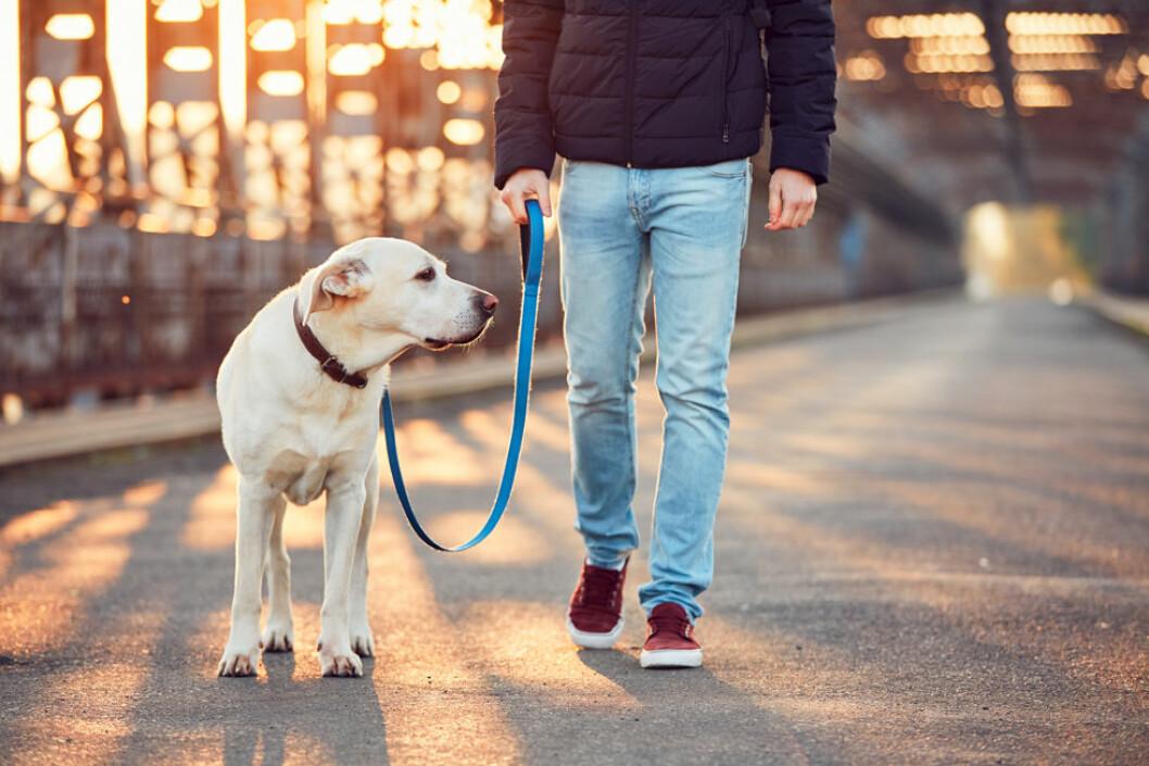 Hva med en hundepasser betalt av jobben? (Illustrasjonsfoto: Colourbox.com)