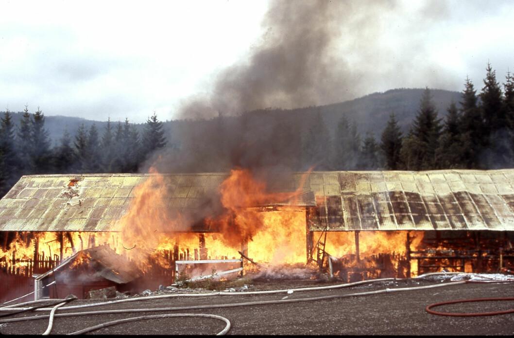 Antallet branner der dyreliv går tapt er nærmest redusert til null på få år, viser ferske tall fra Landbrukets brannvernkomité. (Foto: Landbrukets brannvernkomitè/Thor Kr. Adolfsen/NTB Kommunikasjon)